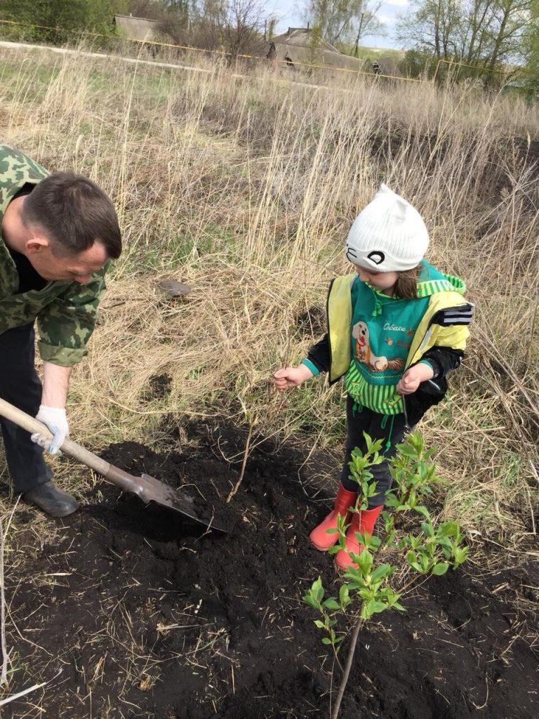 В честь Великой Победы в селе Ингенер-Пятина стартовала акция «Сад Памяти»